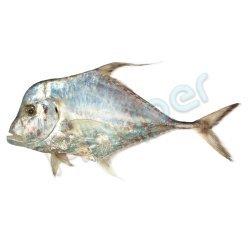ماهی مقوا
